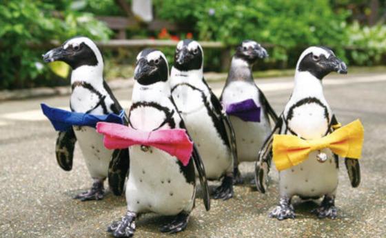 松江フォーゲルパーク ペンギン 散歩