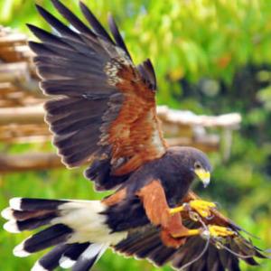 松江フォーゲルパーク 鳥