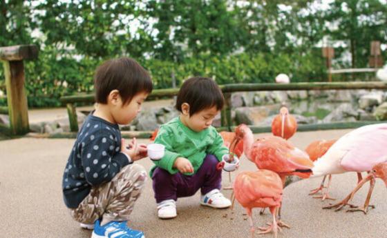 松江フォーゲルパーク 鳥 ふれあい