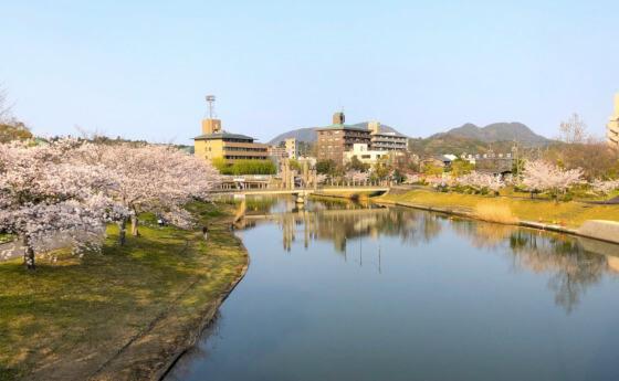 松江 北公園 桜