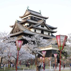 松江城 桜 お花見