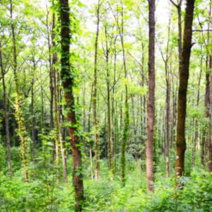 森林公園 どんぐりの森