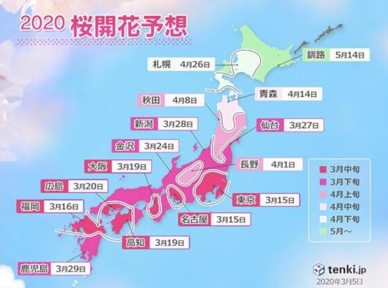 松江 桜 開花予想