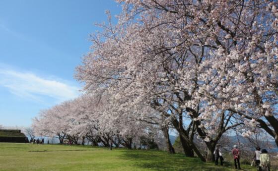 大塚山 桜 名所 松江